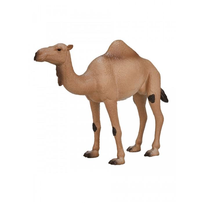 Фигурка Animal Planet Одногорбый верблюд XL